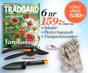 Tidningspremie: Allt om trädgård - 6 nr Fiskars sekatör & spade samt Trädgårdshandskar Rose från GardenGirl
